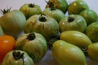 エスケールコラボ1-2グリーントマト1.jpg