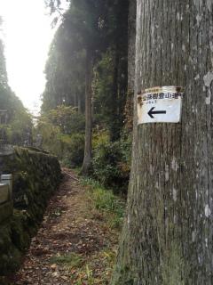 2012・11銀杏登山道.jpg